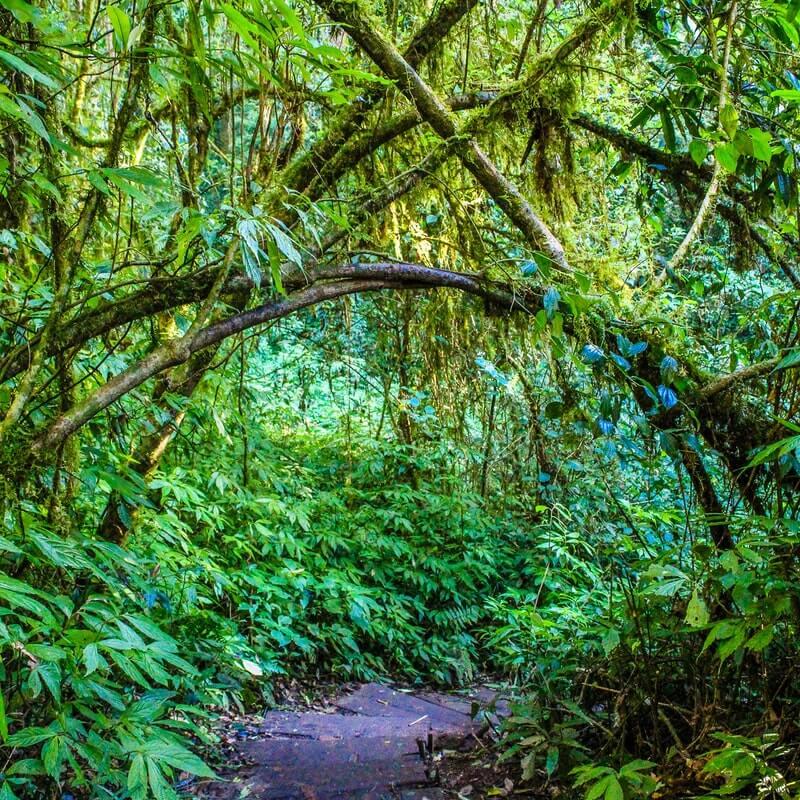 Dschungel mit Baumranken, durch den sich ein Weg bahnt